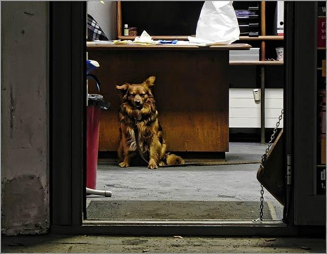 dog_patrol