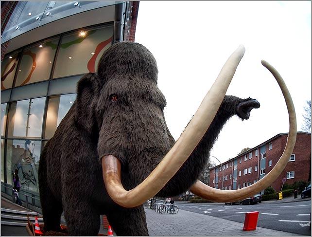 bramfelder-mammut