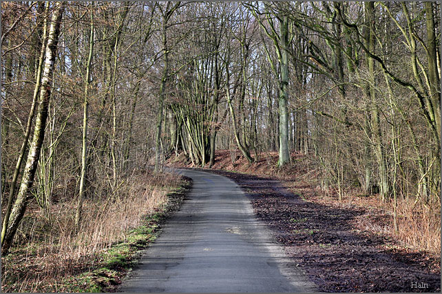 duvenstedt_waldweg
