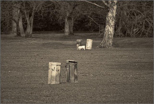 versteckter_hund