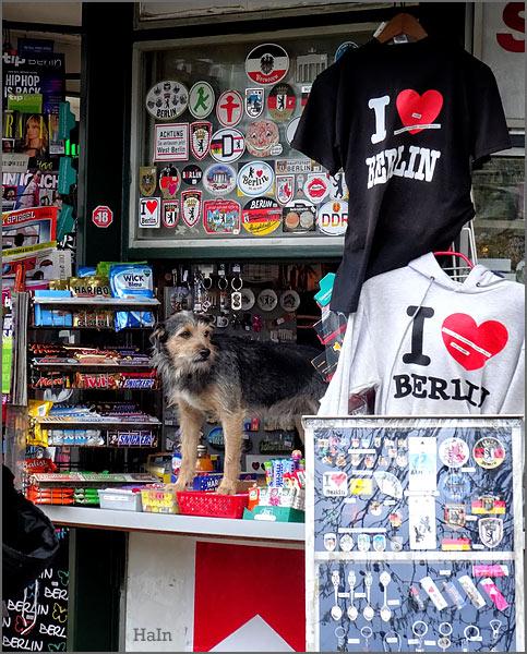 hundeverkaeufer_berlin