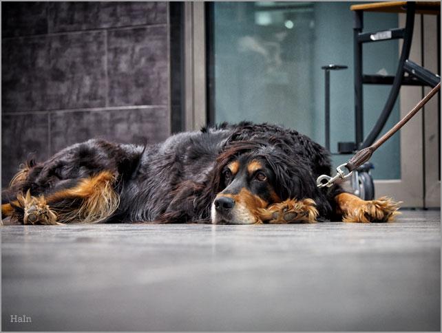 hundewarten