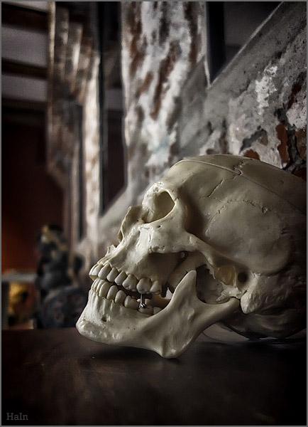 museumsschaedel